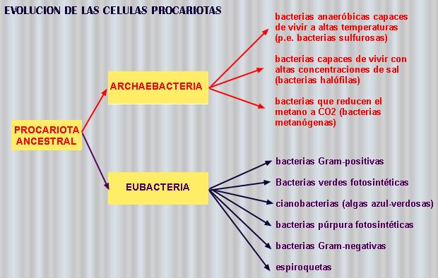 CURSO DE BIOQUMICA
