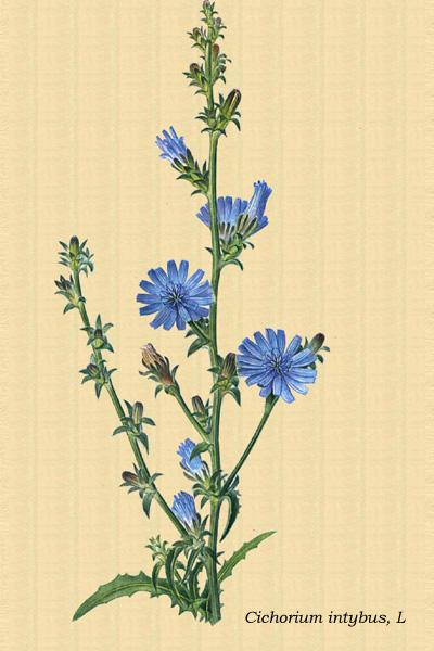 plantas medicinales anabolicas