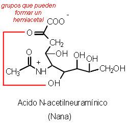 creatinina alta en acido urico alto hierbas medicinales para curar el acido urico que no puedo con acido urico