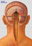 Trombosis venosa profunda miembros inferiores sintomas