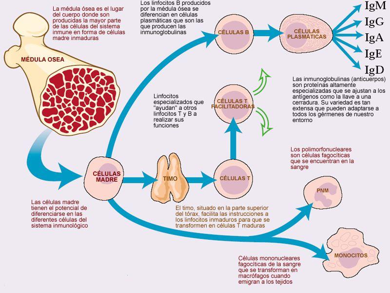 INFECCIONES Y SIDA