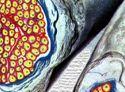 Funciones del sistema nervioso autonomo simpatico y parasimpatico