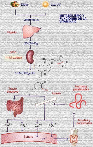 Tengo el metabolismo bajo - Página 2
